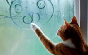 cat-pet-animal-window-drawing-artist-smiling-face-vapour-cute-1280x800