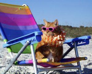 gatto-spiaggia_4825